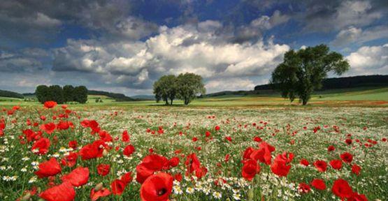 Bitki zenginliği doğa fotoğrafçılarına fırsat sunuyor