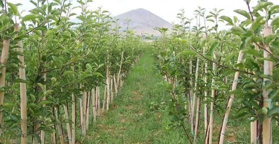 Göksunlu Çiftçilere 32 Bin Elma Fidanı