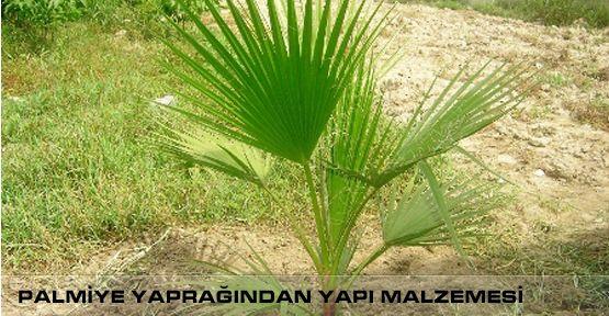 KSÜ'de Palmiye Yaprağından Yalıtımlı Yapı Malzemesi Üretildi
